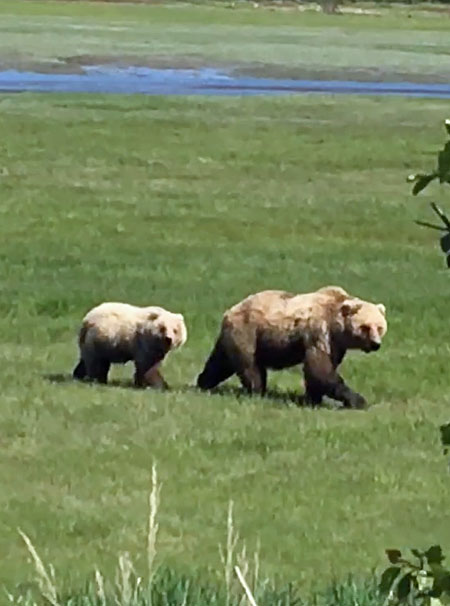 Bear Tour Prices and Rates. Bear Watching and halibut Fishing Combo Trips Available.